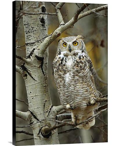 Tim Fitzharris Great Horned Owl Wrapped Canvas Wall Art Western & Country GCS-396558-1624-143